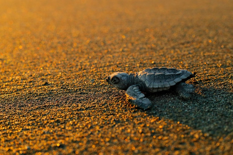 top-5-things-to-do-in-zante-sea-turtles-DayTrip4U