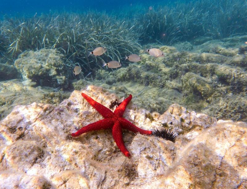 top-things-to-do-in-mykonos-marine-life-daytrip4u
